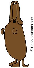 Dachshund standing on its hind legs - Illustration depicting...