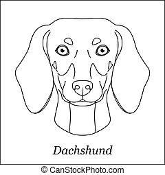dachshund, testa, contorno, razza, isolato, cane, fondo., bianco, nero, portrait., linea, cartone animato