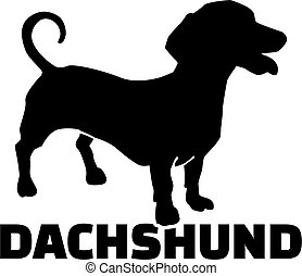 Dachshund with breed name