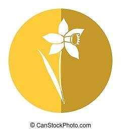 daffodil flower leaf bloom shadow