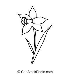 daffodil flower leaf bloom thin line