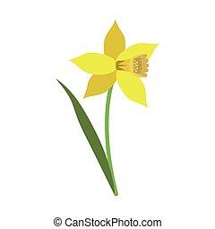 daffodil flower leaf bloom