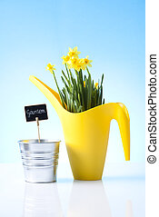 daffodil flowers and garden equipme