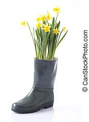 daffodil flowers, garden equipment