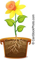 Daffodil in clay pot on white background illustration