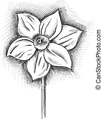daffodil isolated on the white