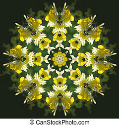 Daffodil Kaleidoscope - A hillside of colorful daffodils...