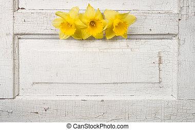 daffodill on a vintage door