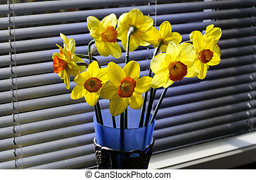 daffodils, день
