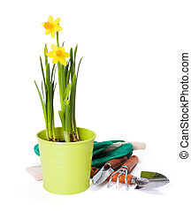 Daffodils and gardening tools