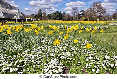 Daffodils and marguerites in the park