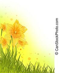 Daffodils - Flower background