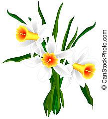 Daffodils - Illustrated daffodils