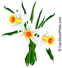 Illustrated daffodils