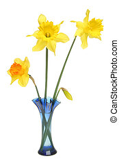 Daffodils in a blue vase