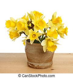 Daffodils in a pot