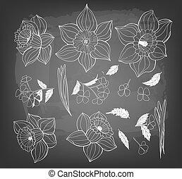 daffodils, lentebloemen, leaves., verzameling