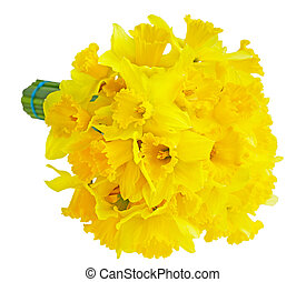 Daffodils - Narcissus Daffodil Lent Lily flower bouquet...
