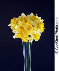 daffodils on black