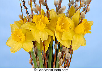 Daffodils on Blue - Macro of daffodils on blue background