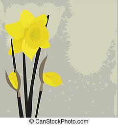 Daffodils on grunge background. Vector illustration