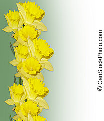 Image and illustration composition daffodils border design element for Spring, Easter or wedding invitation, background, border or frame with copy space