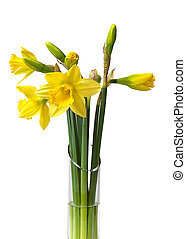 Daffodils - Bunch of daffodils in a glass vase