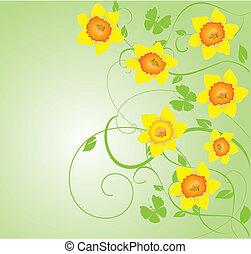 daffodils - vector daffodil frame