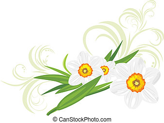 Daffodils with decorative sprigs