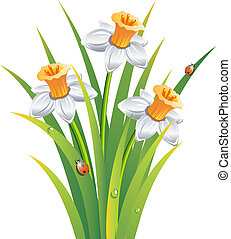 Daffodils with ladybirds in the grass over white. EPS 8, AI, JPEG