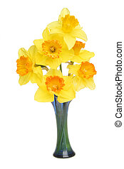Daffs in vase - Daffodils with orange trumpets in a blue...