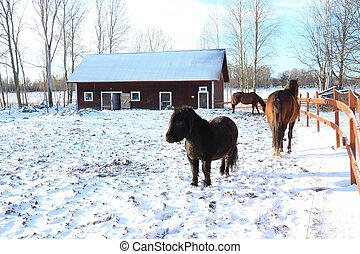 dag, hun, winters, paddock, paarden