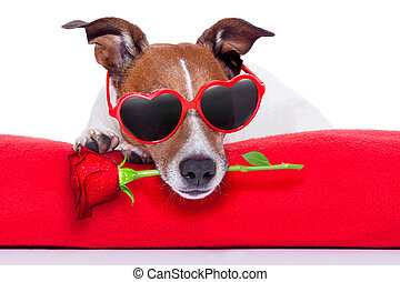 dag valentines, hund