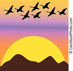 dageraad, of, ondergaande zon , vogels, migrerend