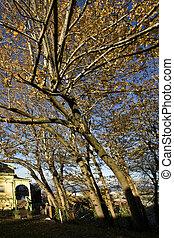 daheim, viktorianische , elms, kork