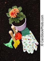 Dahlia and gardening tools