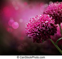 dahlia, automne, fleur, design., à, copy-space
