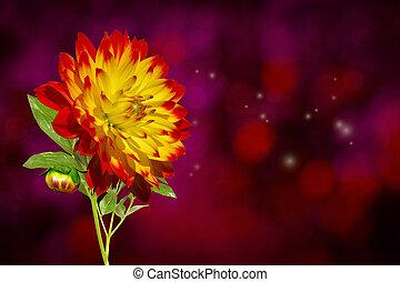 Dahlia Autumn Flower - Fresh autumn flower over dark bokeh...