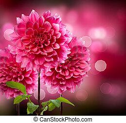 dahlia, efterår, blomster