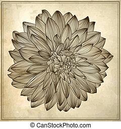dahlia, flor, grunge, desenho, fundo