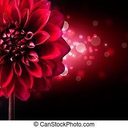 Dahlia Flower Design over Black Background