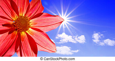 dahlia on background sun
