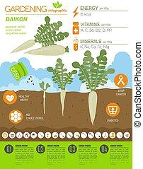 Daikon beneficial features graphic template. Gardening,...