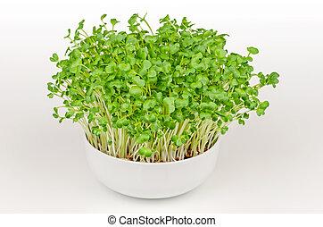Daikon radish microgreens, Japanese radish sprouts in a white bowl