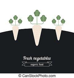 Daikon vegetables illustration. Vegetables garden...