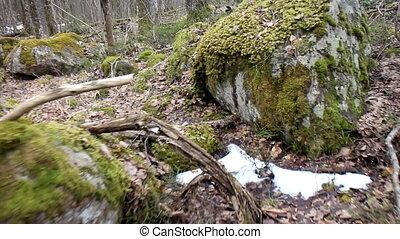 Daily Walk through ancient glacial moraine 2 - Daily Walk...