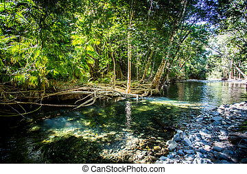 Daintree River Crossing Queensland Australia - A 4WD only ...