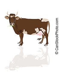 Dairy cow over white background