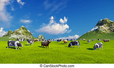 Dairy cows on green alpine pasture - Herd of mottled dairy...