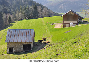 dairy in Chartreuse (France)